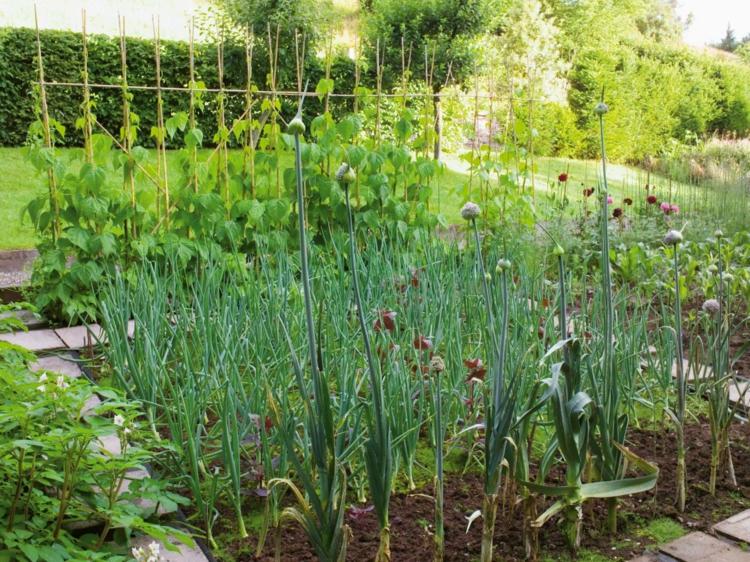 fuentes exteriores plantas comestibles