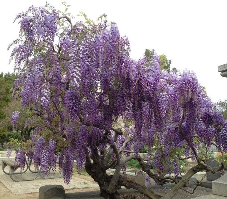 glicina planta-jardin-estilo-original