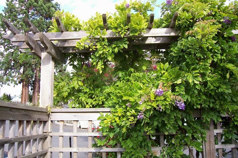 glicina planta-jardin-pergola-madera-diseno