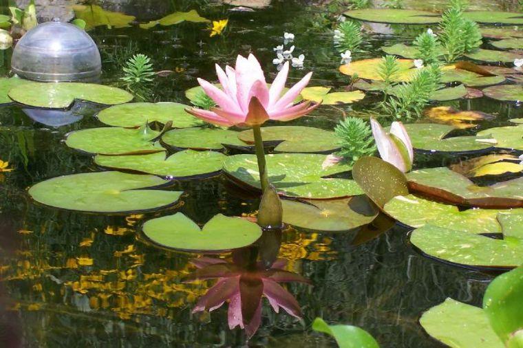 bonita flor rosa