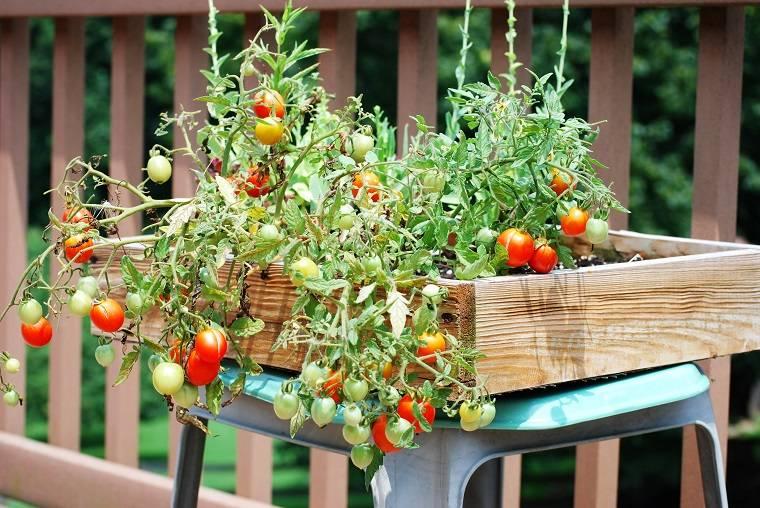 huerto tomates-cherry-ideas-cultivar