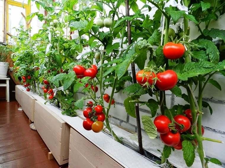 Huerto urbano en el balc n 6 verduras y consejos para - Huerto urbano balcon ...