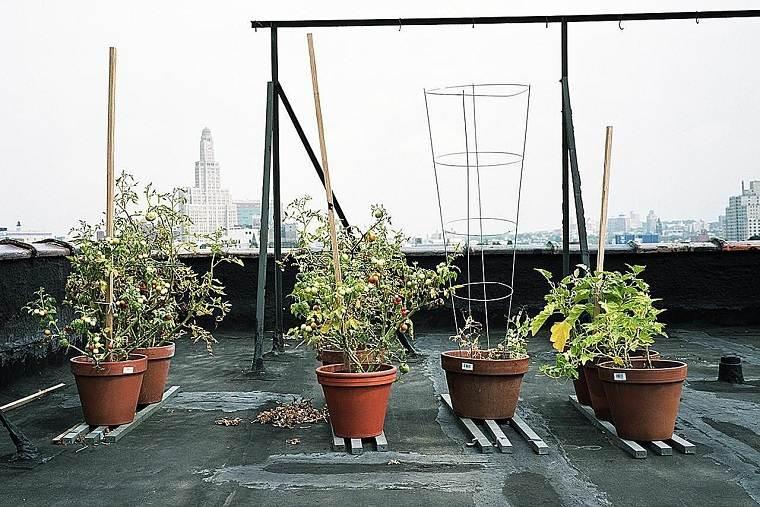 huerto urbano-balcon-ideas-cultivar-tomates