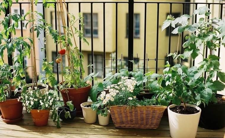 huerto urbano en el balc n 6 verduras y consejos para