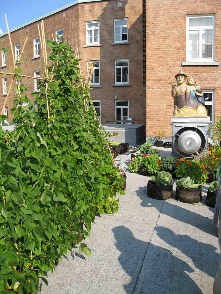 huerto urbano-cultivar-frijoles-balcon