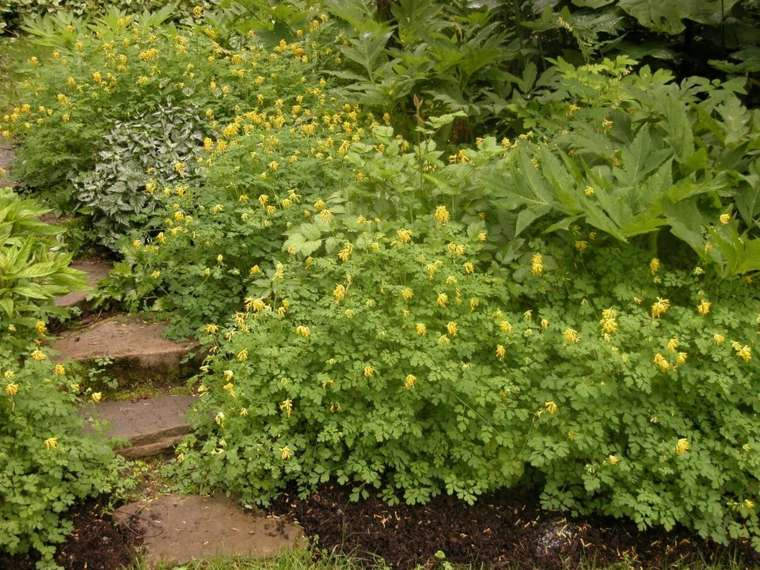 ideas para arreglar un jardín-decoracion-plantas