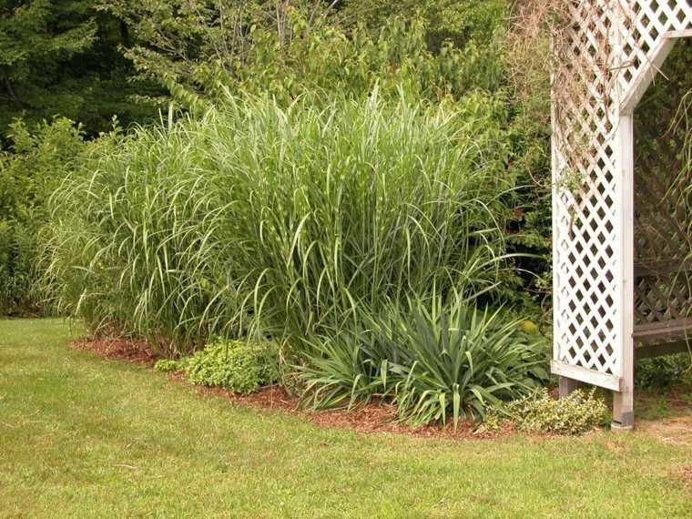 ideas para arreglar un jardín-hierbas-alatas-jardin