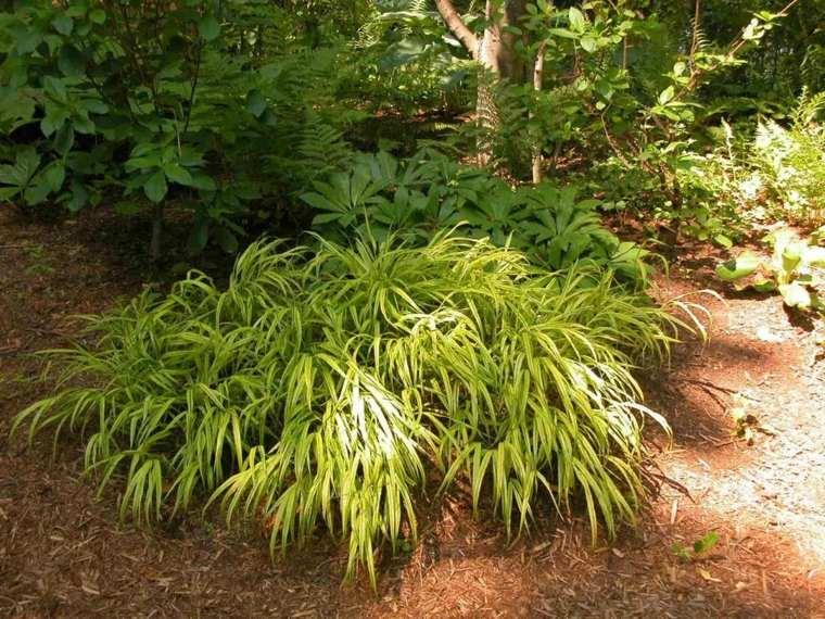 ideas-para-arreglar-un-jardín-plantas-cuidado