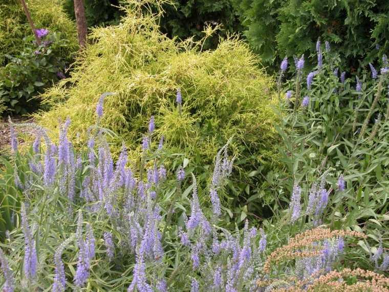 ideas-para-arreglar-un-jardín-plantas-verdes