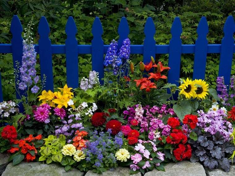 Im genes de flores bonitas que puedes plantar en el jard n - Cosas para el jardin ...