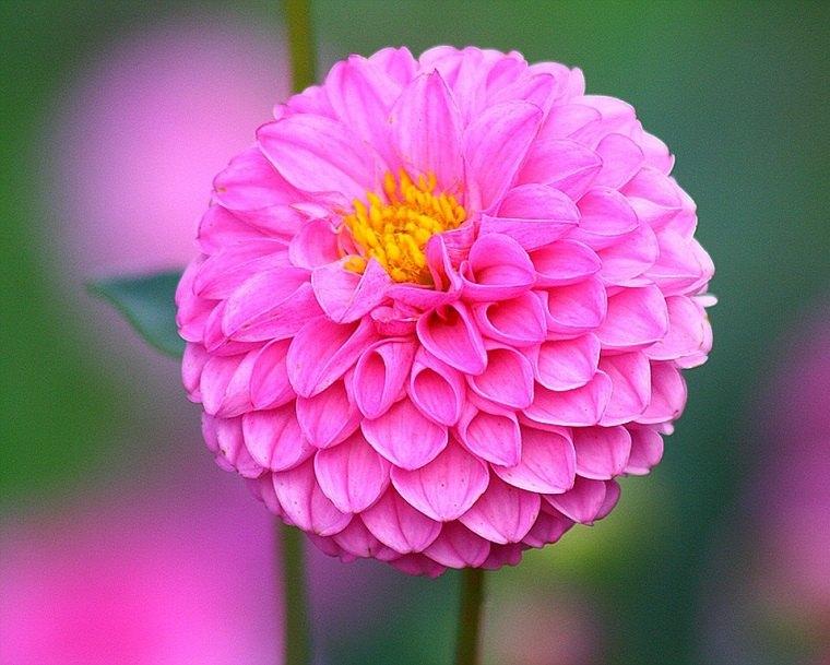 Imágenes de flores bonitas que puedes plantar en el jardín -