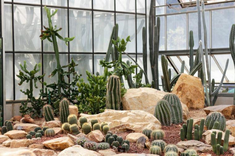jardin-de-cactus-efectos-ambientales