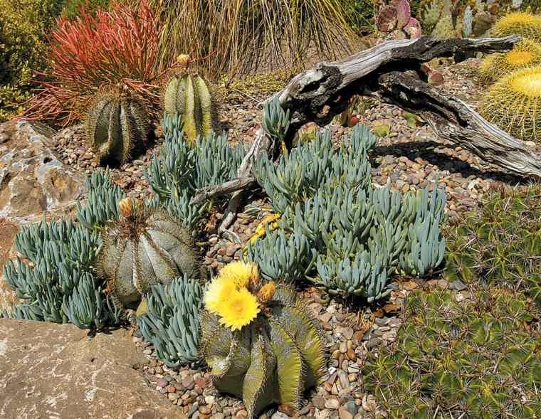 jardin de cactus madera-estilos-cercados