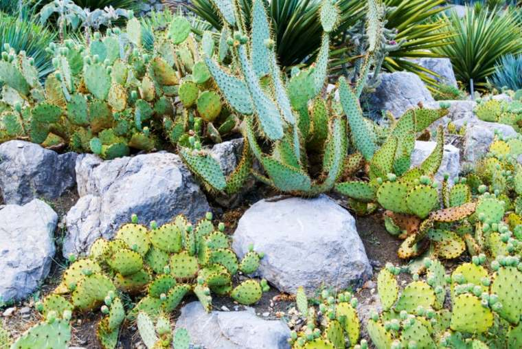 jardin de cactus rocas-estantes-ideas
