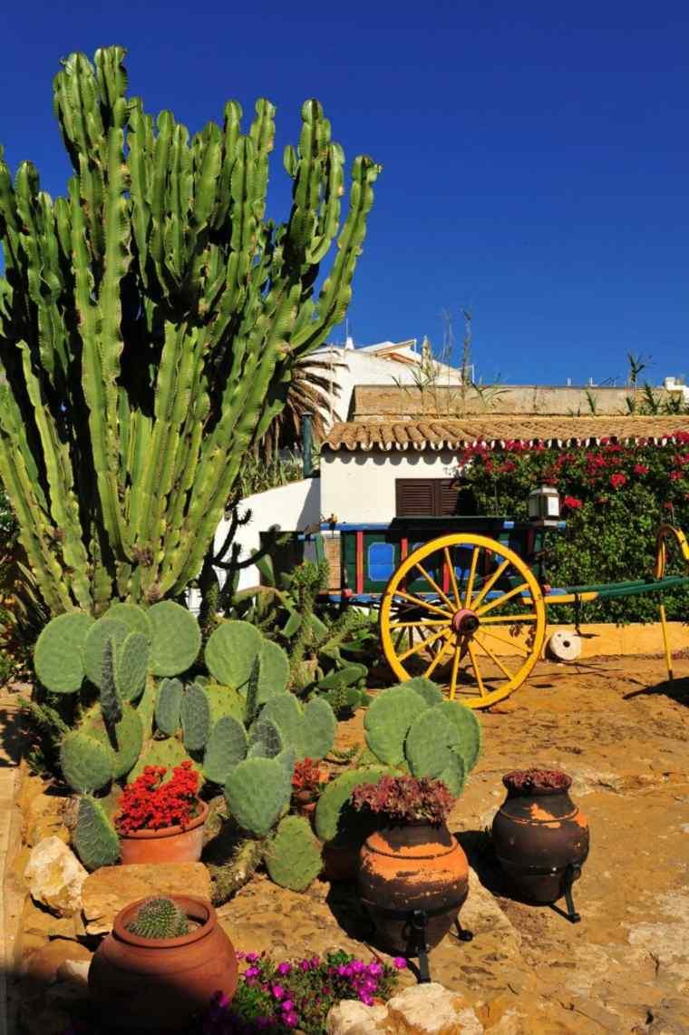 jardin de cactus rustico-fresco-eslegante