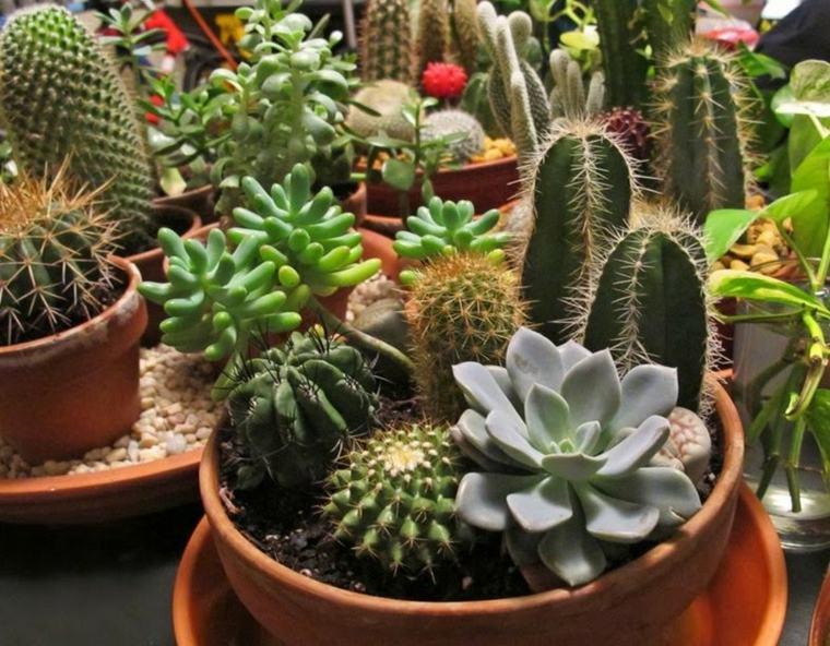jardin de cactus solo-macetas-patio