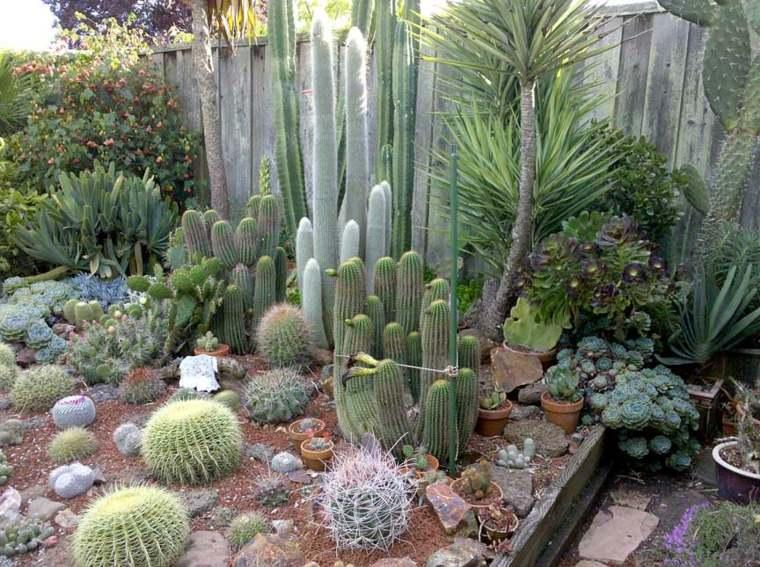 jardin de cactus suculentas-rustio-espacio