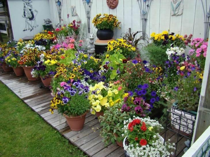 macetas variado fresco espacio patios