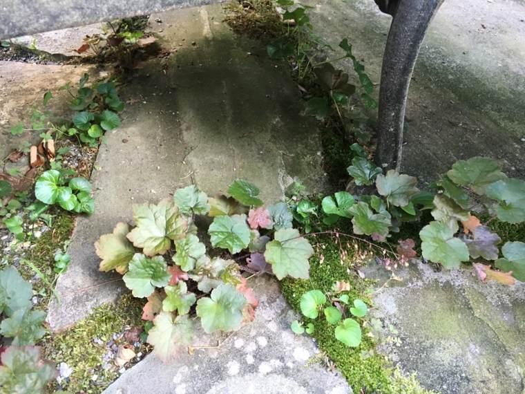 suelo piedra y musgo