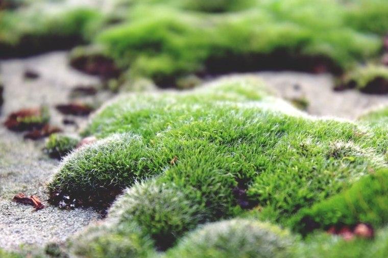 musgos jardín