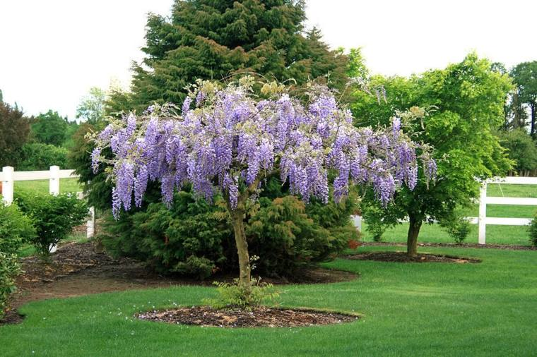 planta-jardin-como-ciltivar-glicina