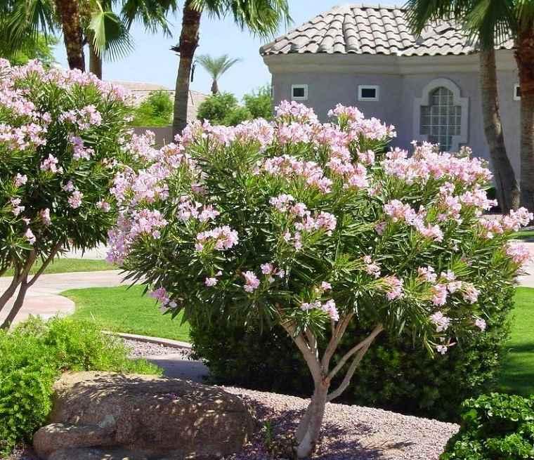 Plantas de jard n 6 arbustos y consejos sobre c mo - Arbustos con flores ...