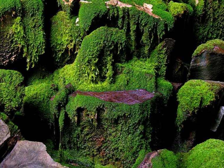 rocas cubiertas musgo