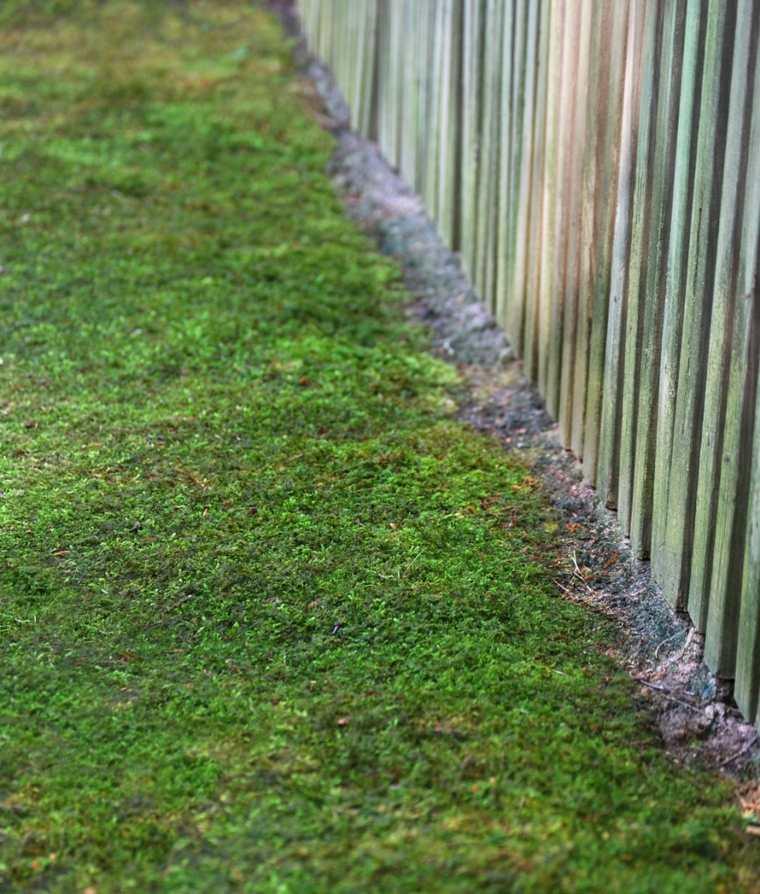 ideas y consejos para plantar musgo