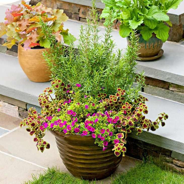variedades plantas especiales soluciones