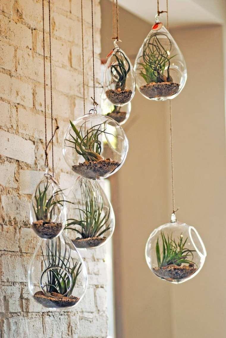 bolas colgantes con plantas