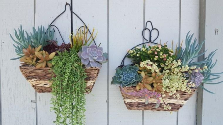 cestos decorativos con plantas