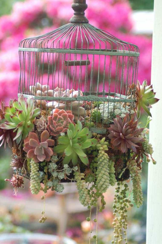 original jaula vintage con plantas suculentas