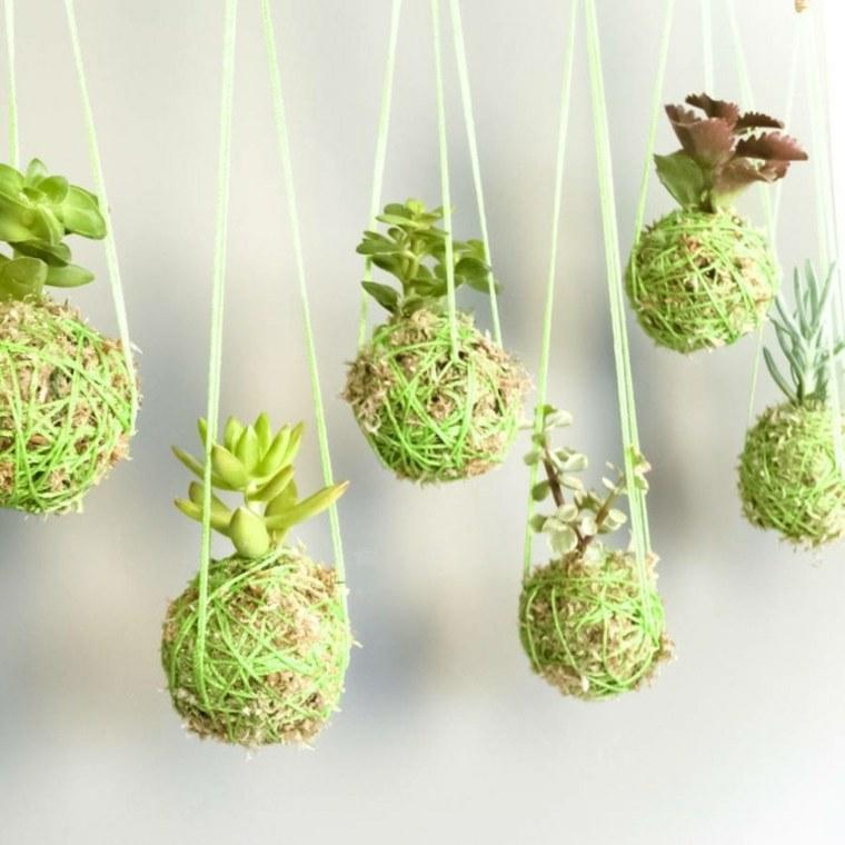ideas decorativas con plantas suculentas