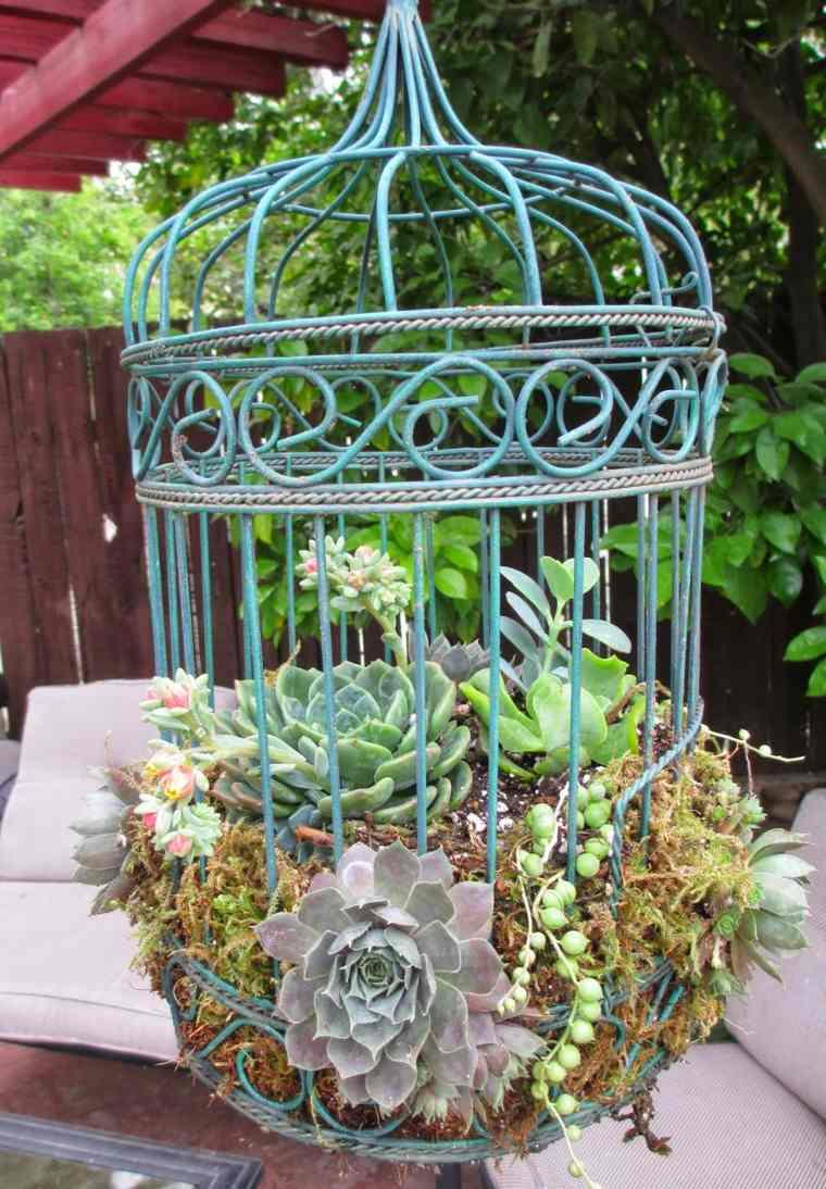 jaulas de pájaros decorativas con suculentas