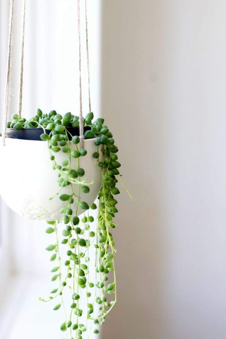 plantas suculentas colgantes