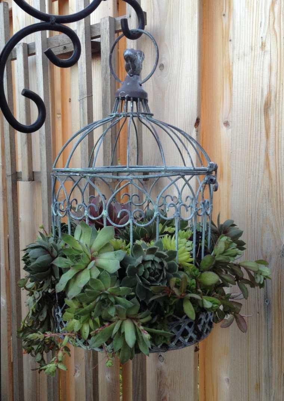 jaula vintage con plantas suculentas