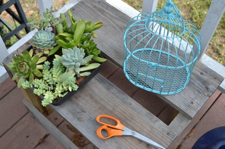 jaulas de pájaros decoradas con suculentas