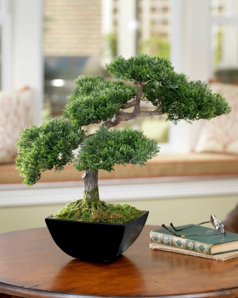 arbol-bonsai-decorar-casa-interior-diseno
