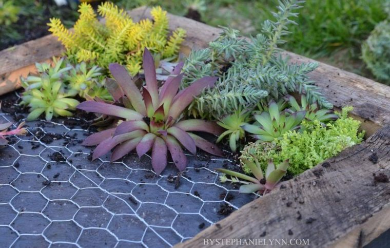 jardín vertical de suculentas de colores