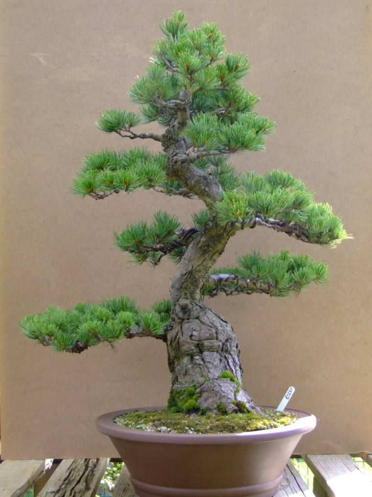 bello-bonsai-ideas-cuidado-opciones-diseno