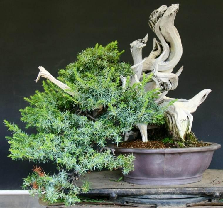 bonsai-ideas-opciones-cuidad-poda-consejos