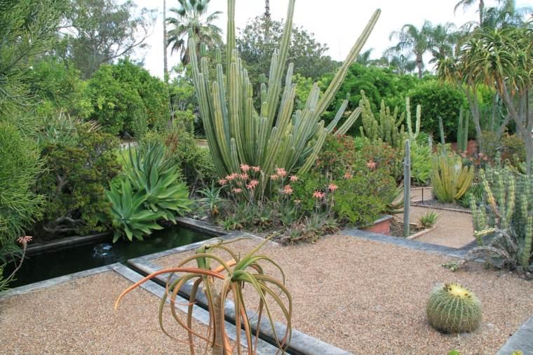 Cactus y suculentas para jardines y patios de exterior for Cactus de exterior