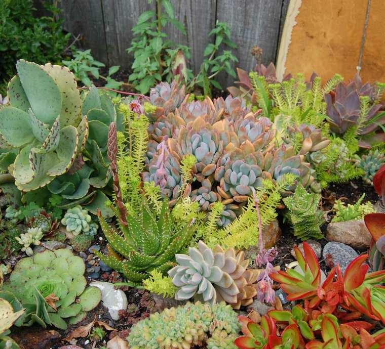 paisajes y jardines de cactus y suculentas