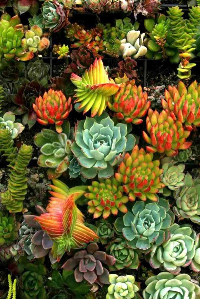 diseñar jardines de cactus y suculentas