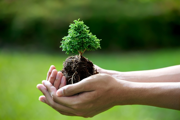 como-cuidar-un-bonsai-especies-arboles