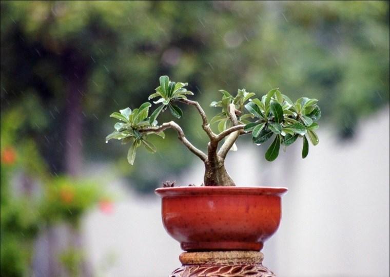 cómo cuidar un bonsái-exterior