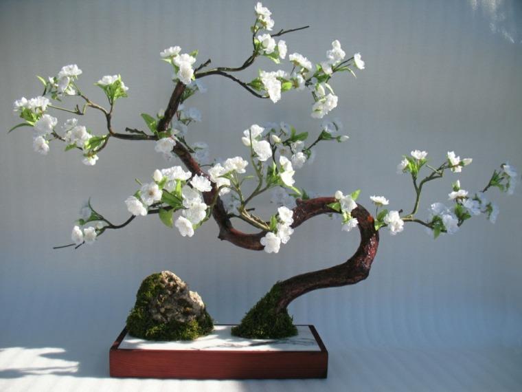 como-cuidar-un-bonsai-planta