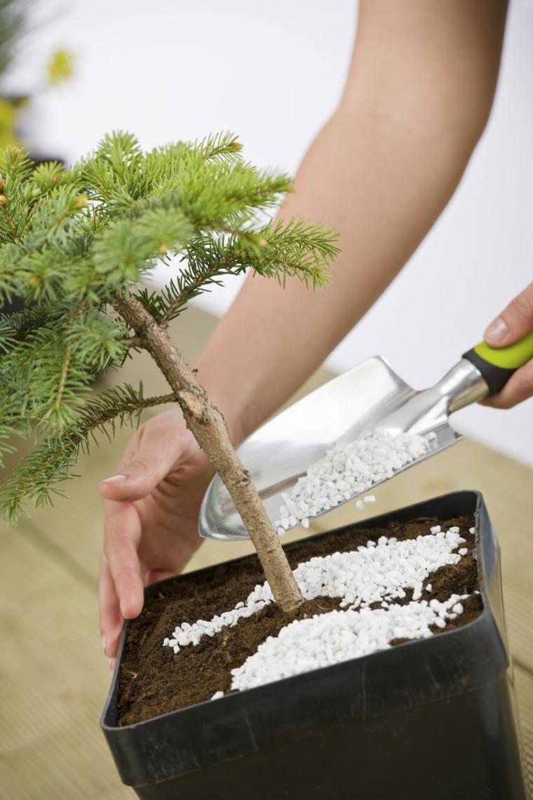 C mo cuidar un bons i los principios b sicos de su cuidado - Como cuidar un bonsai ...