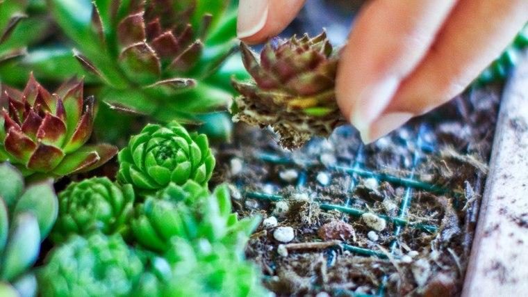 jardines verticales Diy de suculentas