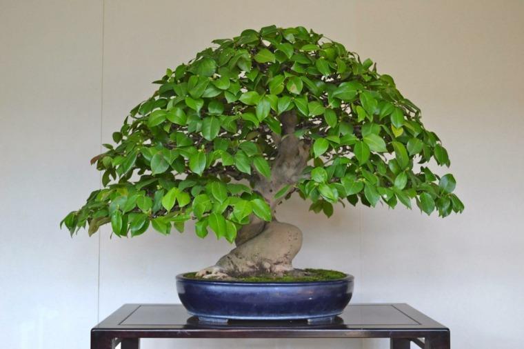 cultivo-cuidado-bonsai-arbol-consejos